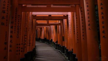 The Torii of Fushimi Inari by LunaFeles