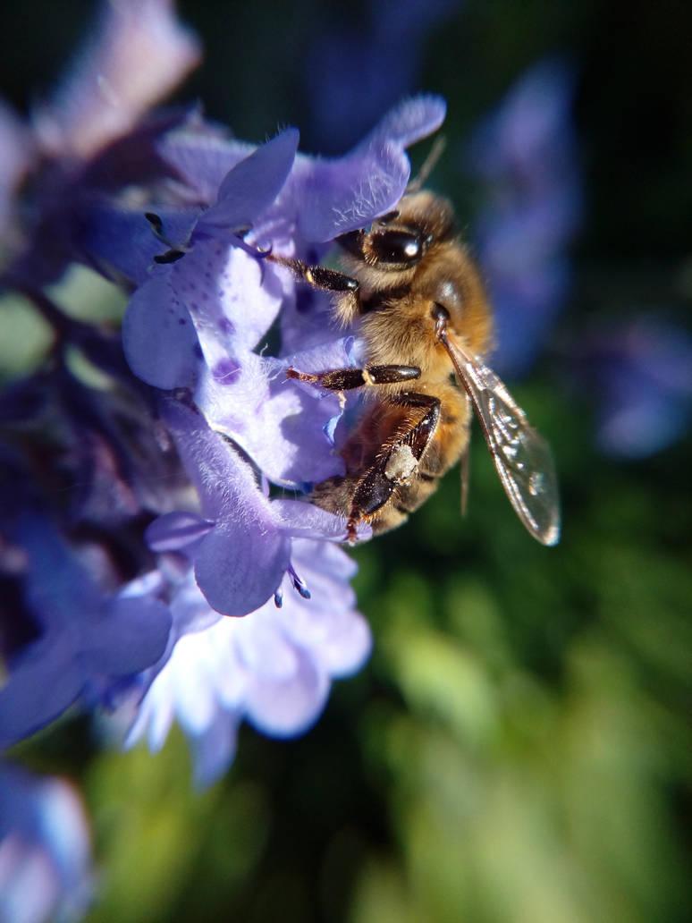 Bee by Jathor