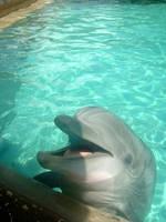 Dolphin 1 by Hannatar