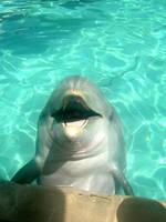 Dolphin 3 by Hannatar