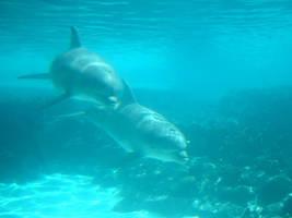 Dolphin 4 by Hannatar
