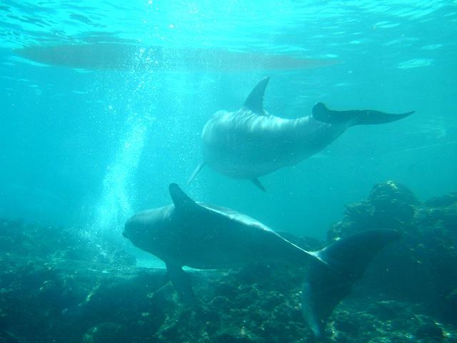 Dolphin 5 by Hannatar