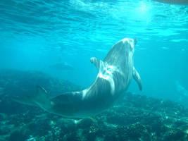 Dolphin 6 by Hannatar