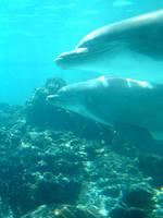 Dolphin 7 by Hannatar