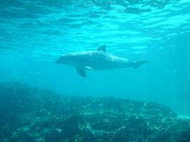 Dolphin 8 by Hannatar