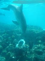 Dolphin 9 by Hannatar