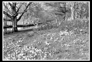 Spring Time Black and White by Hannatar