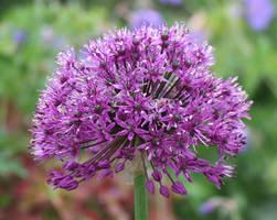 Flower 1 by Hannatar