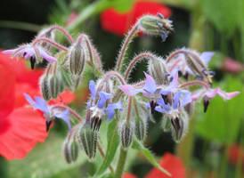 Flower 2 by Hannatar