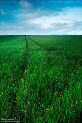 Green Road by Philippe-Albanel