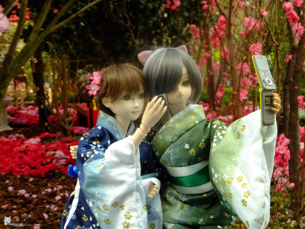 Sakura by the bay 2 by iwahoshi