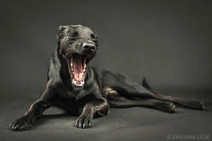 Pynio's Yawn by FerBarchetta