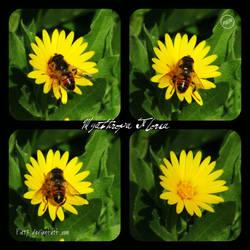 Myathropa Florea by Pier7