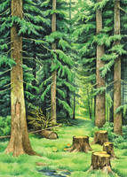 Forest by ironland