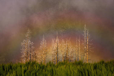 Rainbow naked trees by MarcoSantosMarques