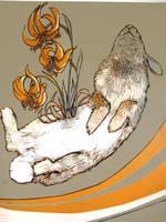 untitled-dead rabbit on grey by myodalisque