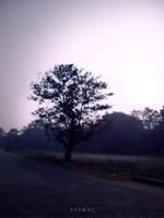 The Wisdom Tree by Saswat777