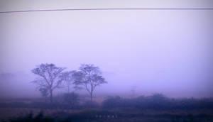 Mist by Saswat777