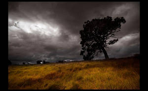 crooked tree by spako