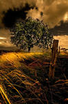 the tree by spako
