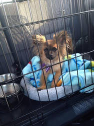 Precious Puppy by greenmamba5