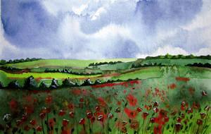 poppies field by Jelena-Misljenovic