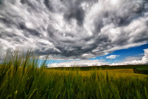 The Field HDR by Creative--Dragon