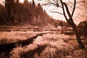 Water Fields by Creative--Dragon