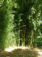 Bamboo background stock by Billy-jean-stock