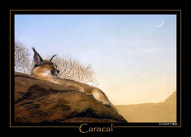 Caracal for Caracal by ewm