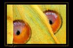 Fuzzy Eyes by ewm