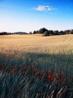 Red pionts by WojciechGorski