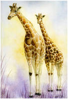 Giraffes by evilllama-polly