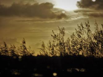 Golden Hour Rain by CyranoInk
