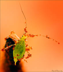 Dirty Aphid by AimishBoy