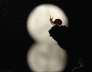 Full Moon by AimishBoy