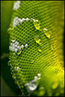 Python Scales Macro by Tonicwind