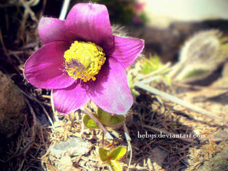 Spring Sensation_III by hebys