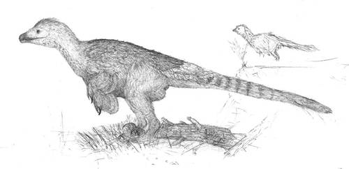 Dragon of Hatzeg by Jeda45