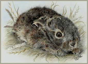 Scared little baby hare by FrenchTechnoKitten