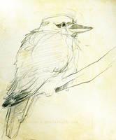 Kookaburra by Ahkward