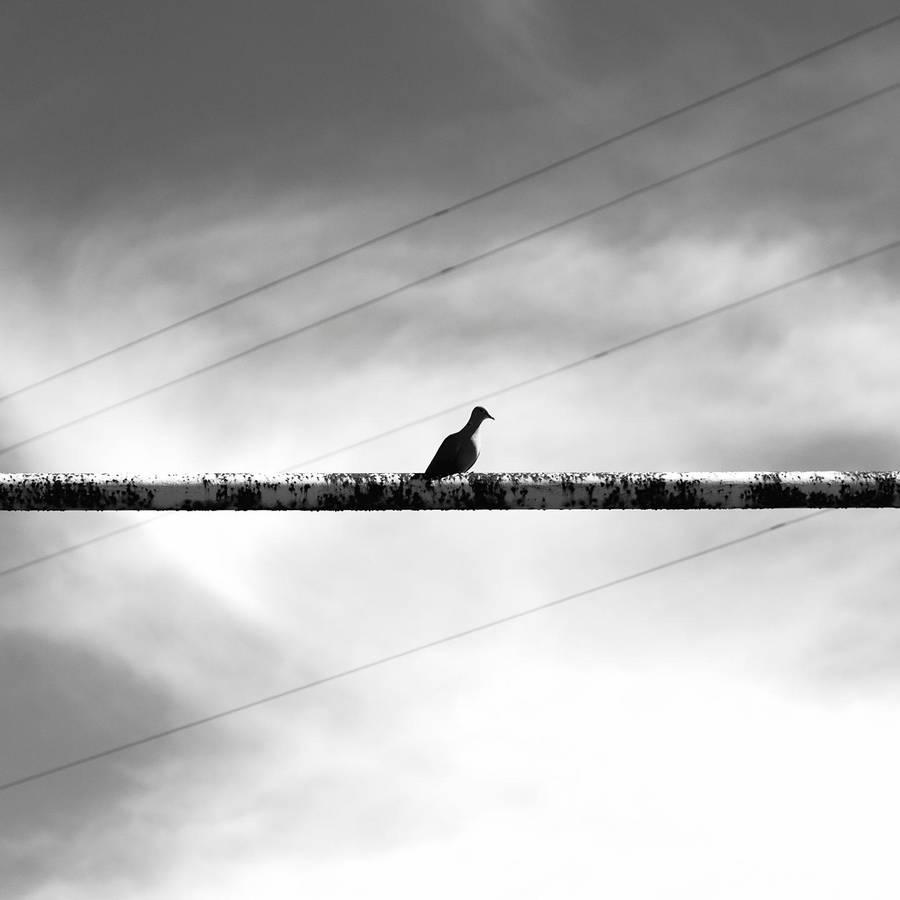 Bird by Evillatenighttv
