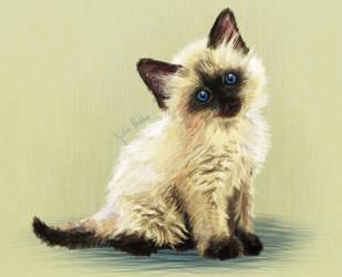 Kitten by Viscose