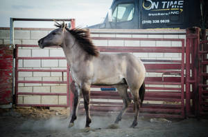 DWP FREE HORSE STOCK 149 by DancesWithPonies