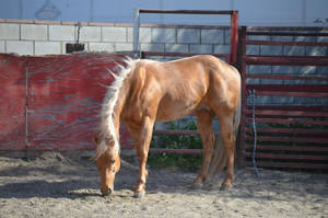 DWP FREE HORSE STOCK 156 by DancesWithPonies