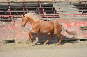 DWP FREE HORSE STOCK 154 by DancesWithPonies
