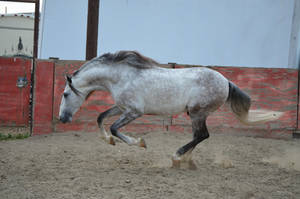 DWP FREE HORSE STOCK 169 by DancesWithPonies