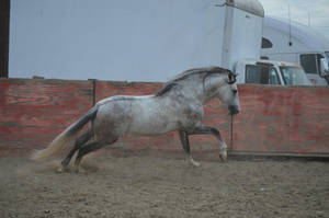 DWP FREE HORSE STOCK 170 by DancesWithPonies