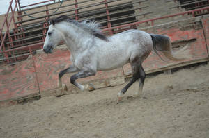 DWP FREE HORSE STOCK 176 by DancesWithPonies