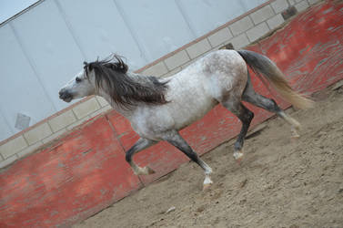 DWP FREE HORSE STOCK 180 by DancesWithPonies